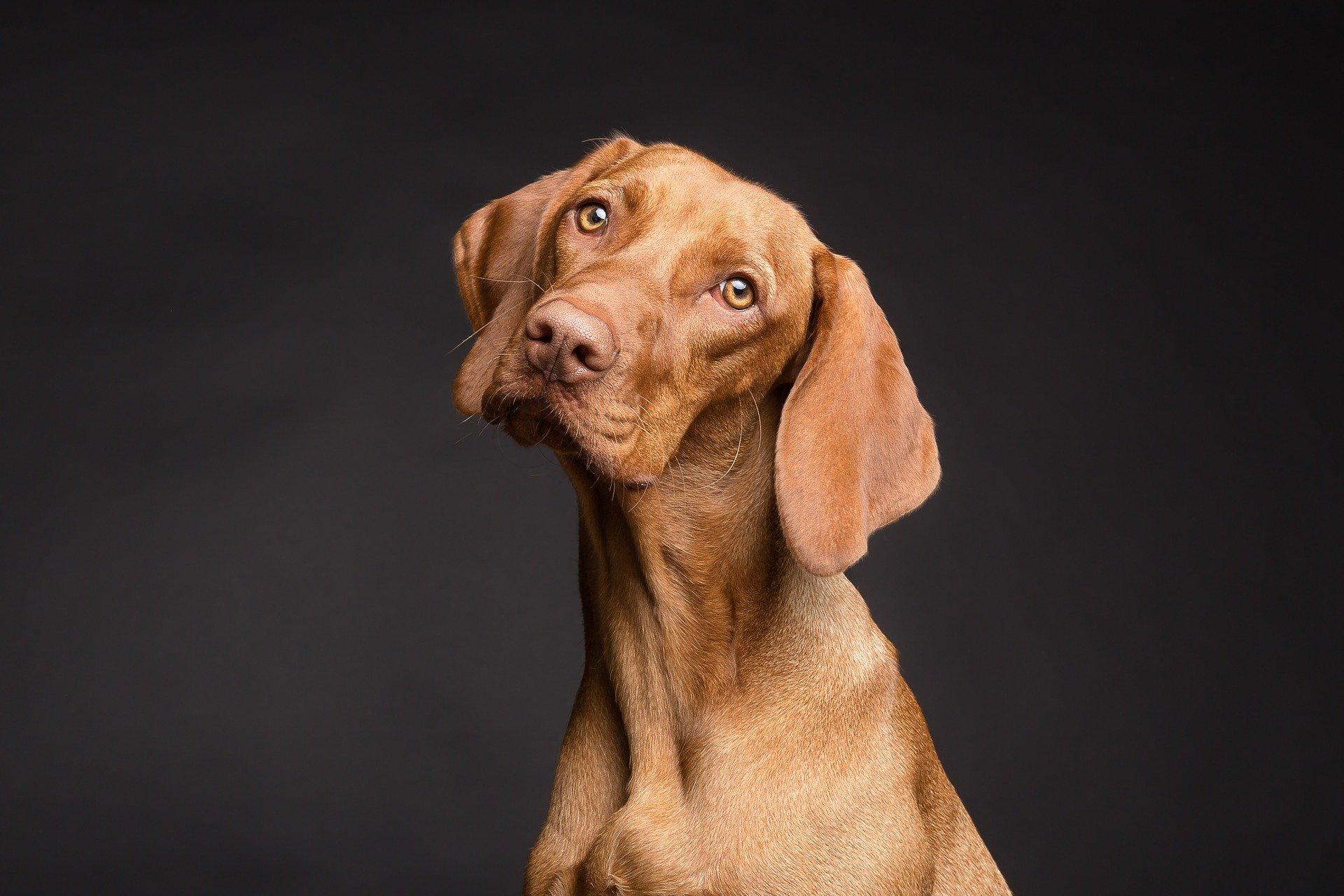 5 razones de porque deberías prevenir la Leishmaniosis canina