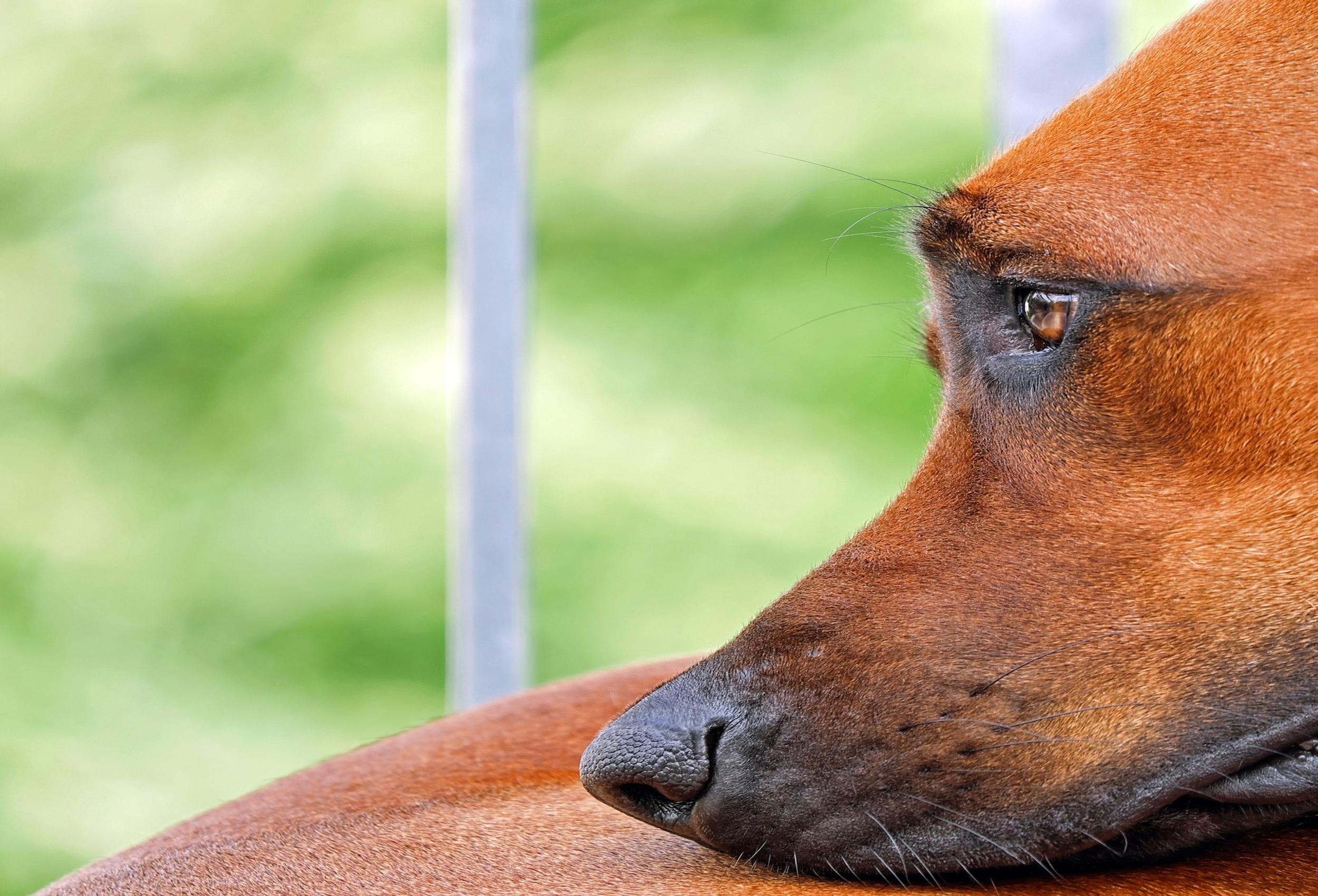 Alimentos tóxicos para tu perro