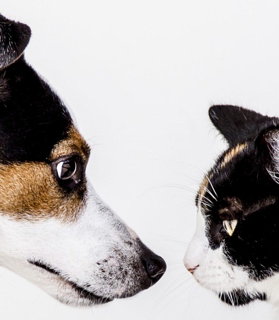 Ansiedad por separación en perros y gatos, gatos deprimidos, perros deprimidos, sindrome post-vacacional en perros y gatos, perros y gatos post confinamiento.