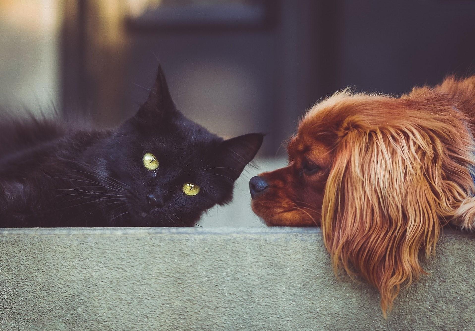 Ansiedad por separación en perros y gatos