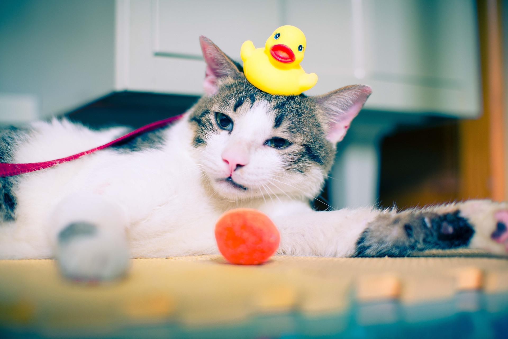 Beneficios que aporta a tu salud el tener un gato en casa