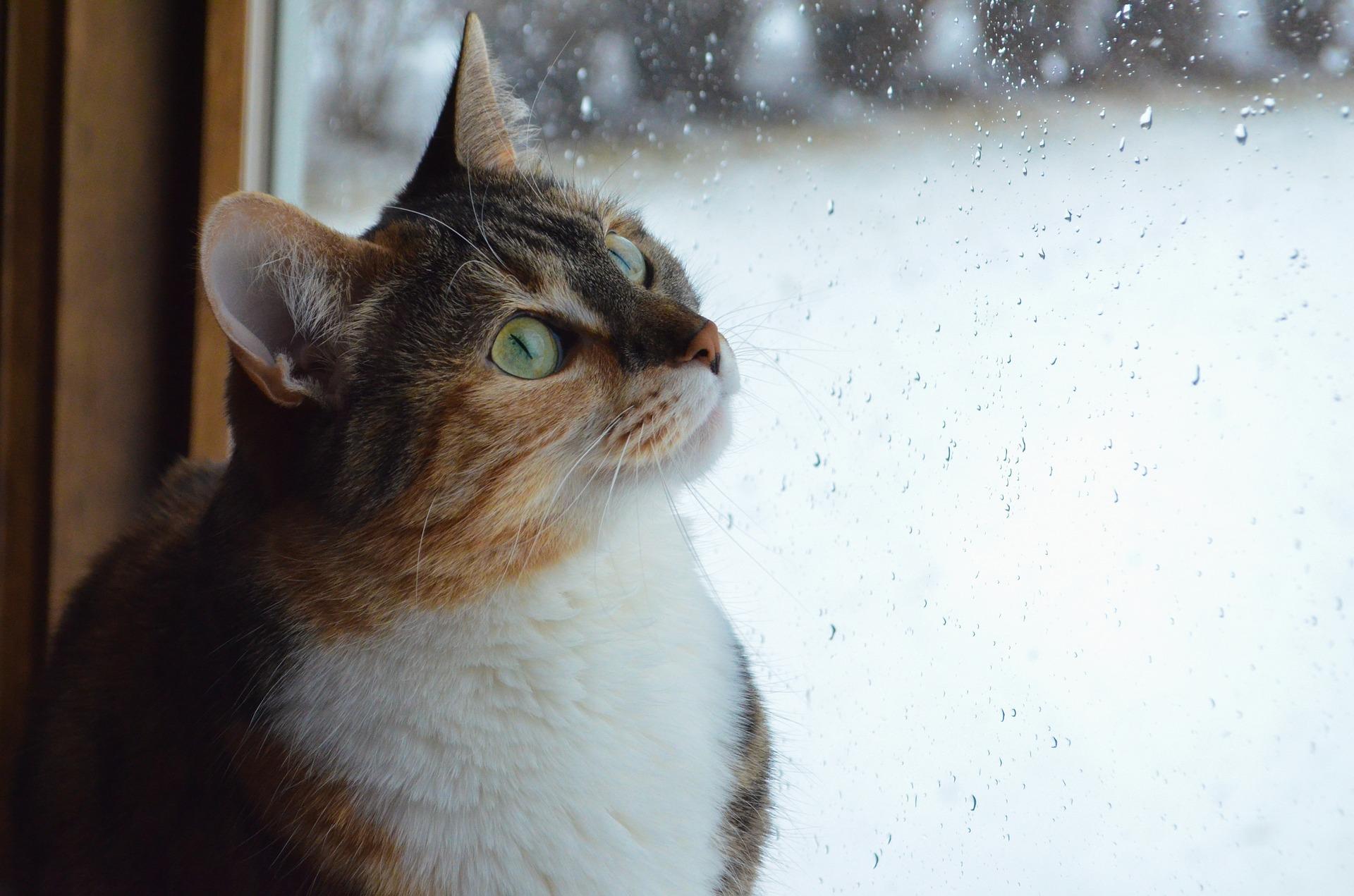 Cómo afectan las lluvias y la humedad a tu gato