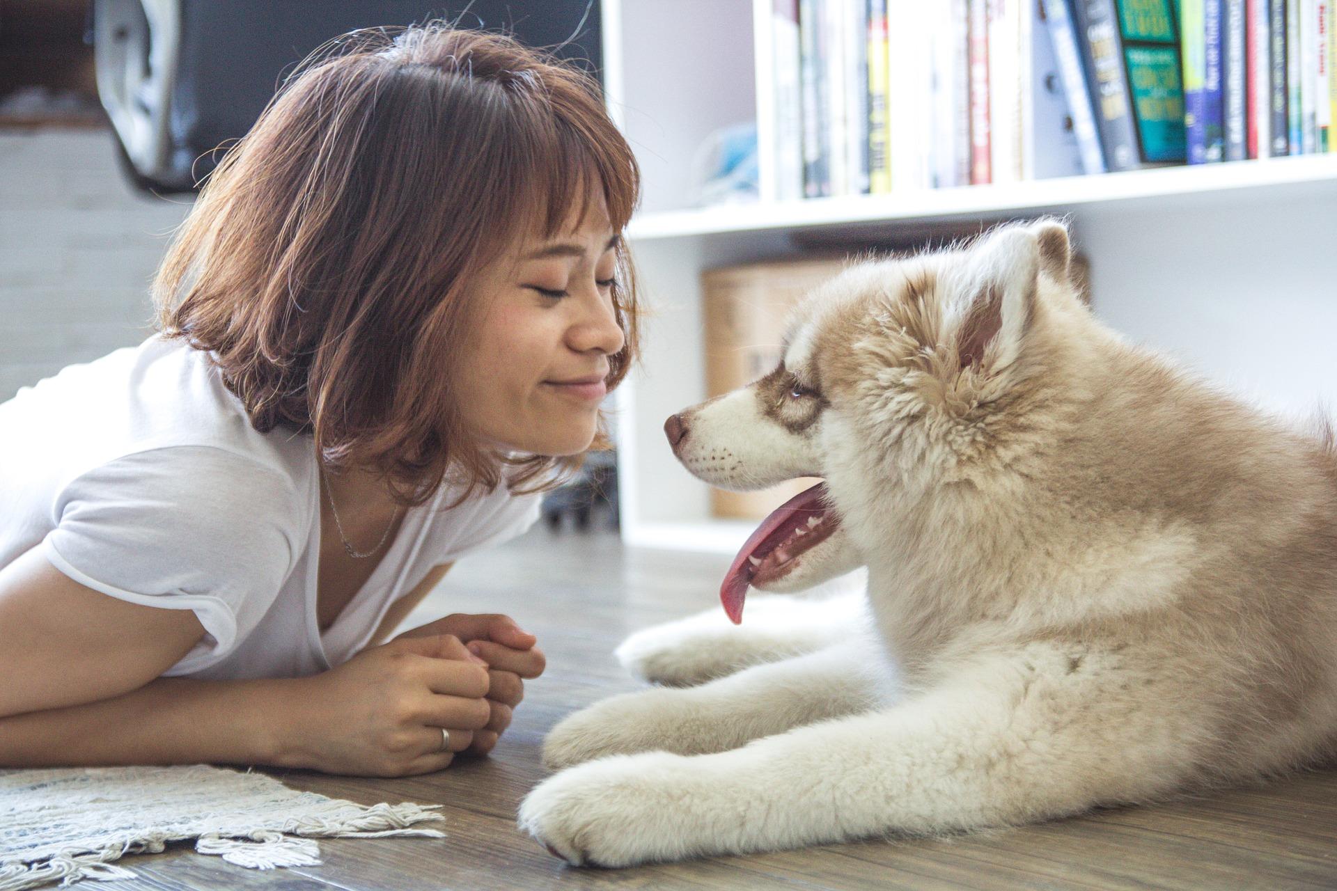 Coronavirus - Juegos para tu perro en casa (Parte I)