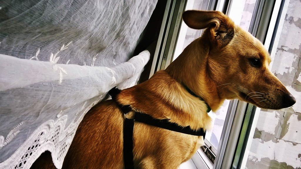 Coronavirus: Juegos para tu perro en casa, como entretener a mi perro en casa, como ejercitar a mi perro en casa, entretenimiento para perros, juegos para perros