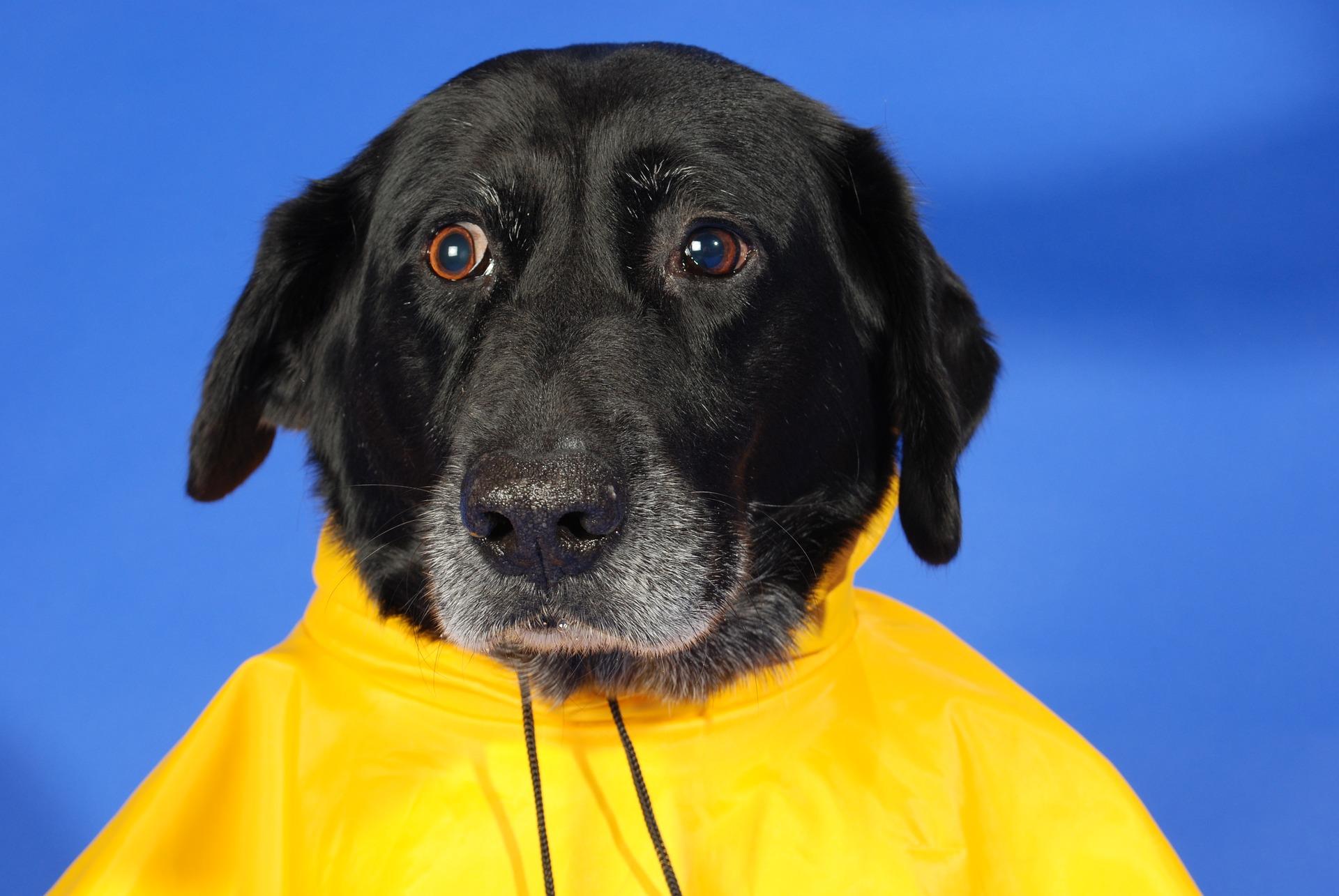Perro feliz consejos para cuidarle de la lluvia