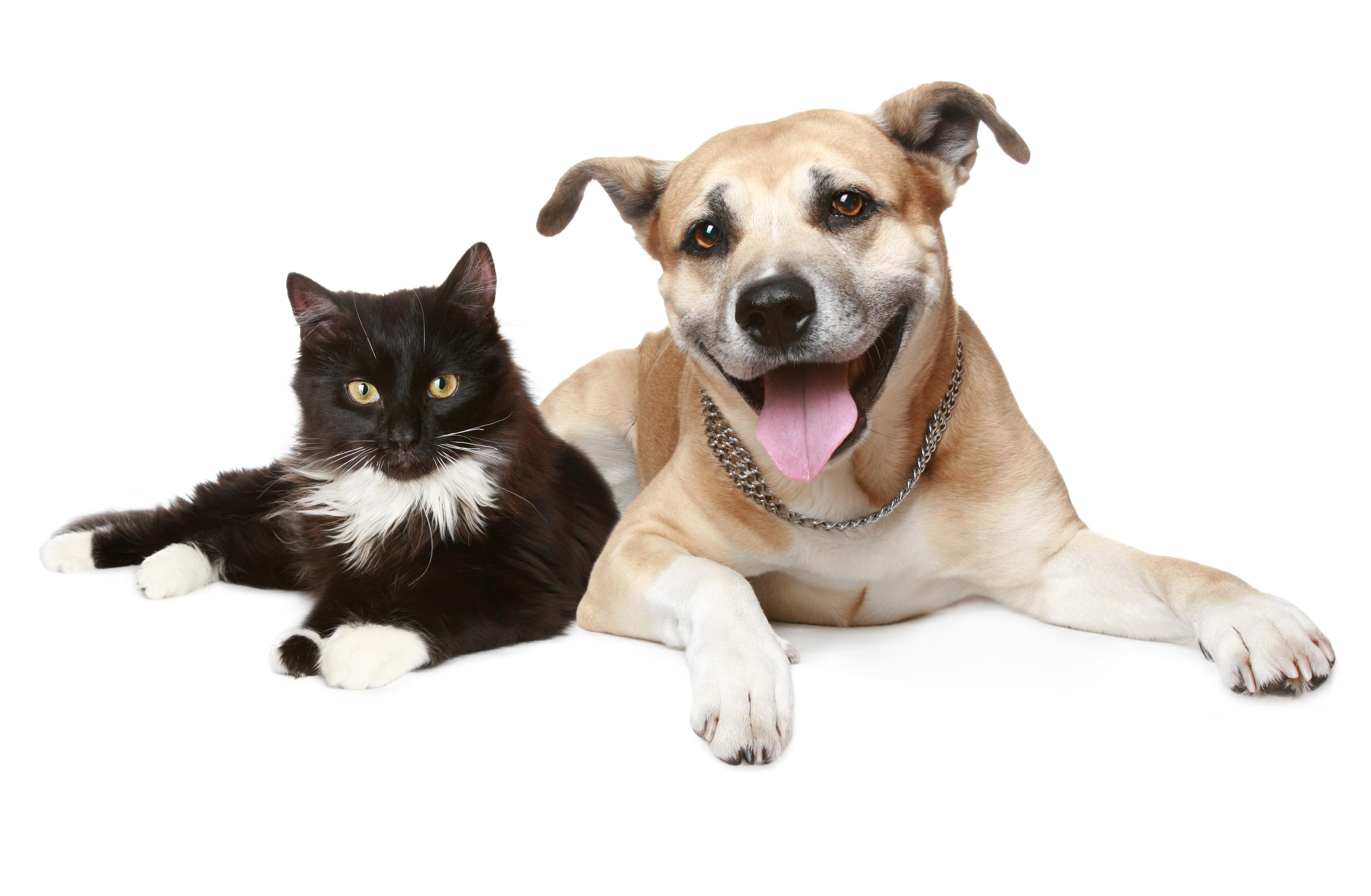 Enfermedades de las mascotas en verano