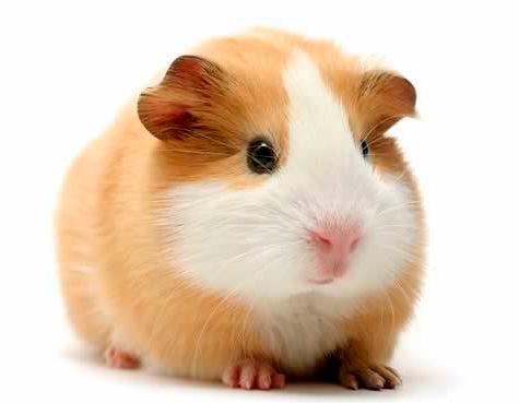 medicamentos para roedores