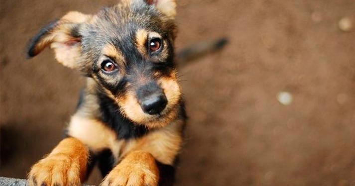 Aspirina para perros