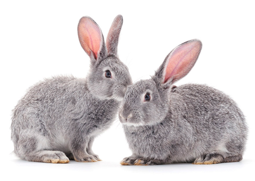 Enfermedades de los conejos