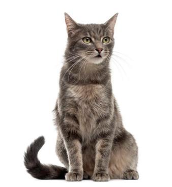 medicamentos para gatos
