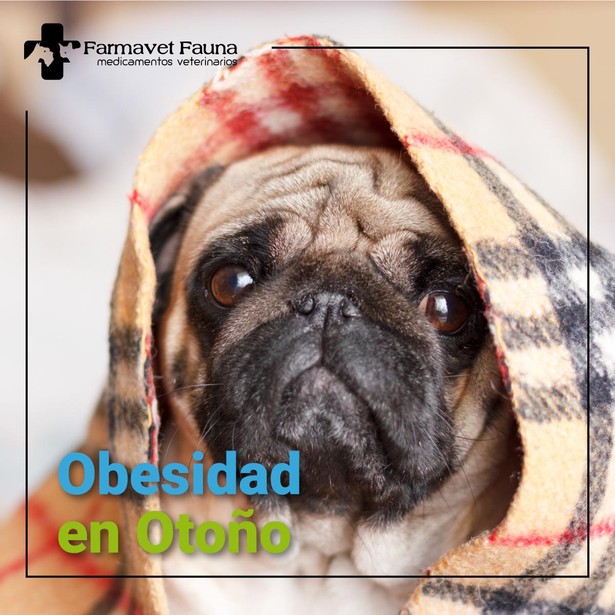 obesidad canina otono