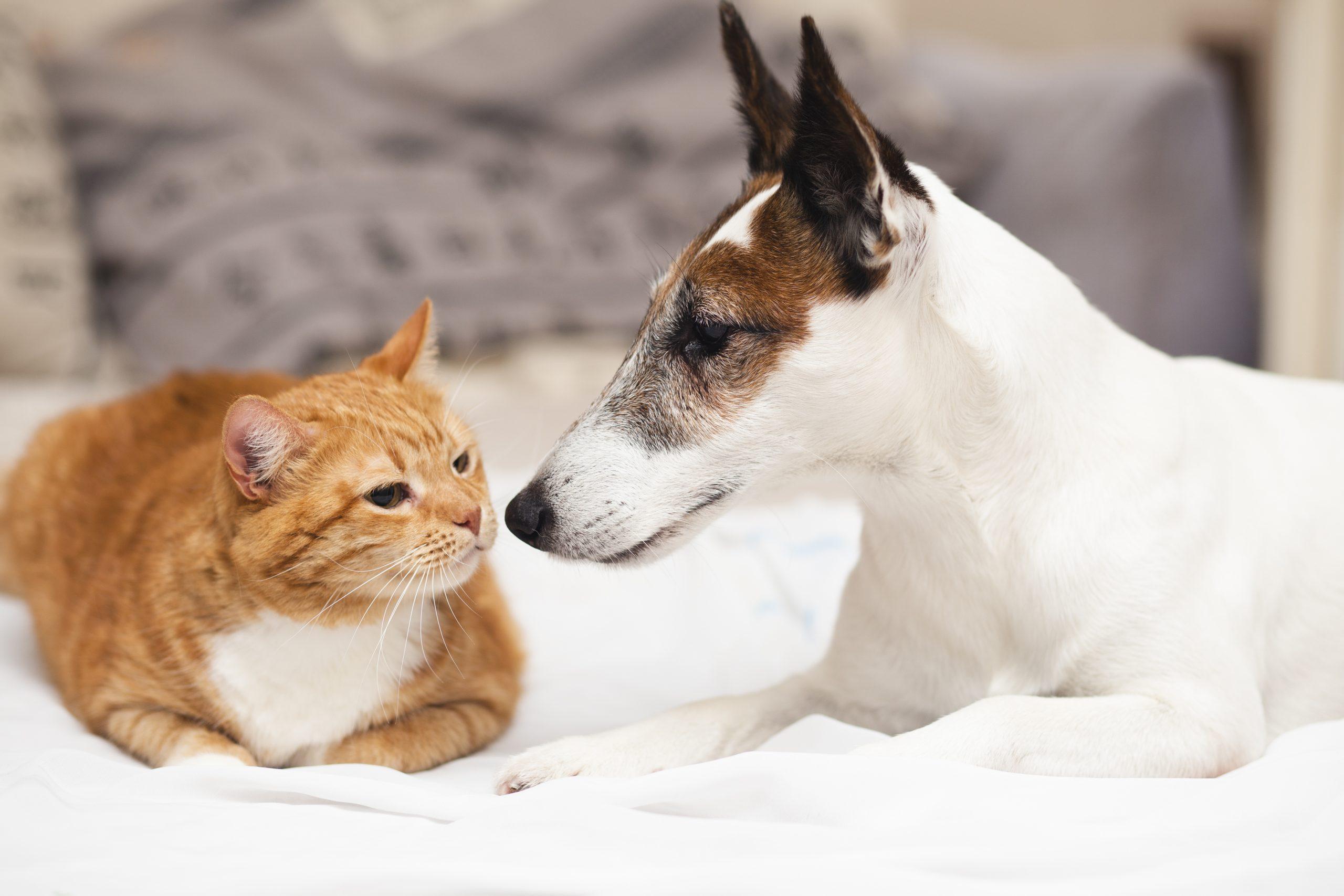¿Cómo evitar obesidad en perros y gatos durante el confinamiento por Covid-19?
