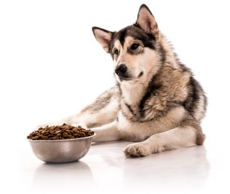 dietas veterinarias