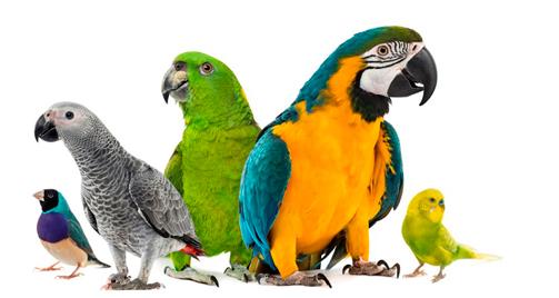 medicamentos para aves